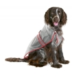 Dog-Rain Coat 46cm Sv